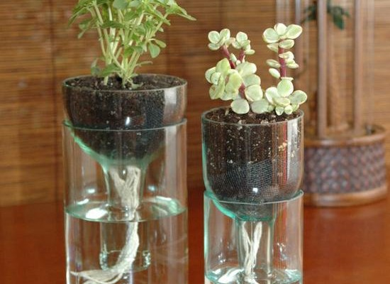Herb Pots Made from Wine Bottles